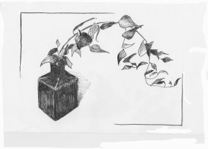 Pen & Ink--Ivy